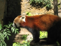 2005-09-18-zoo-de-doue-la-fontaine-008.jpg