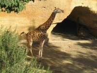 2005-09-18-zoo-de-doue-la-fontaine-011.jpg