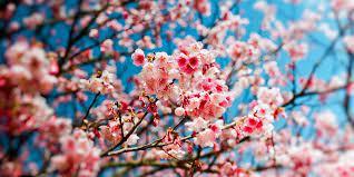 Bientôt le printemps!…